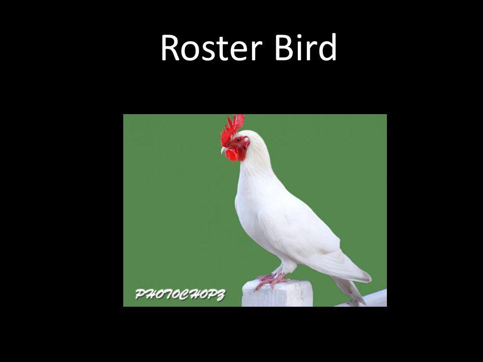 Roster Bird