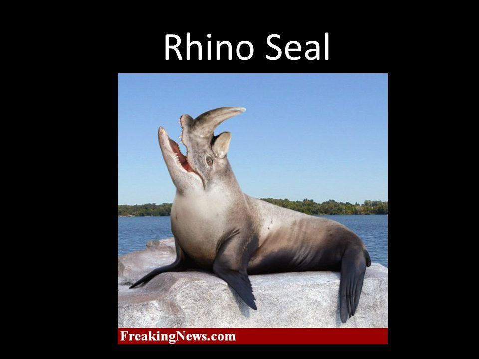 Rhino Seal