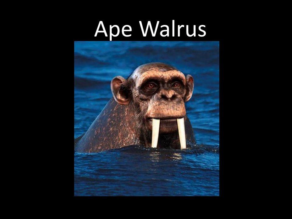 Ape Walrus