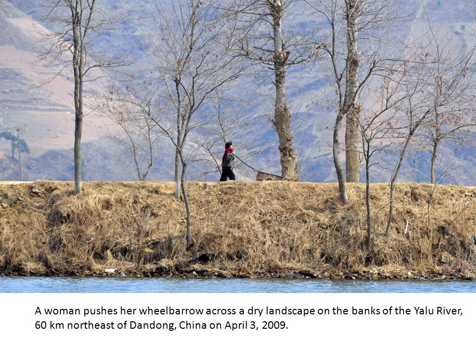 A man walks his ox cart along the banks of Yalu River in Hyesan on April 5, 2009