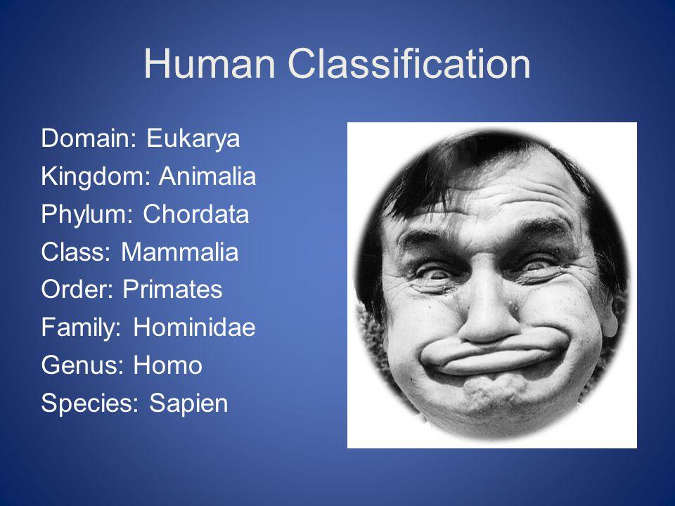 Domain: Eukarya Kingdom: Animalia Phylum: Chordata Class: Mammalia Order: Primates Family: Hominidae Genus: Homo Species: Sapien