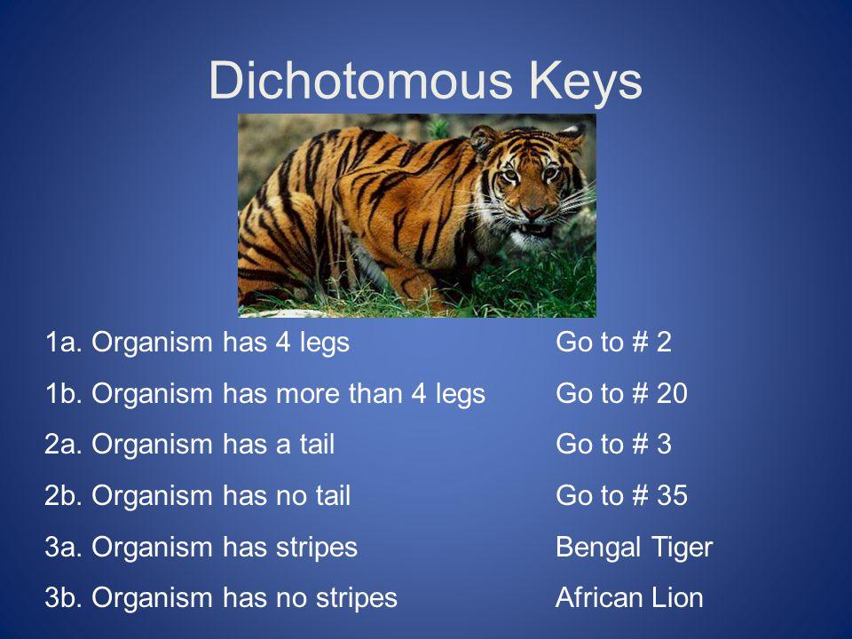 Dichotomous Keys 1a.Organism has 4 legsGo to # 2 1b.