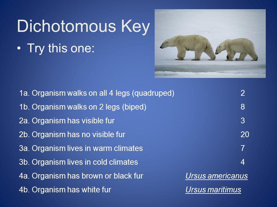 Dichotomous Key Try this one: 1a.Organism walks on all 4 legs (quadruped)2 1b.