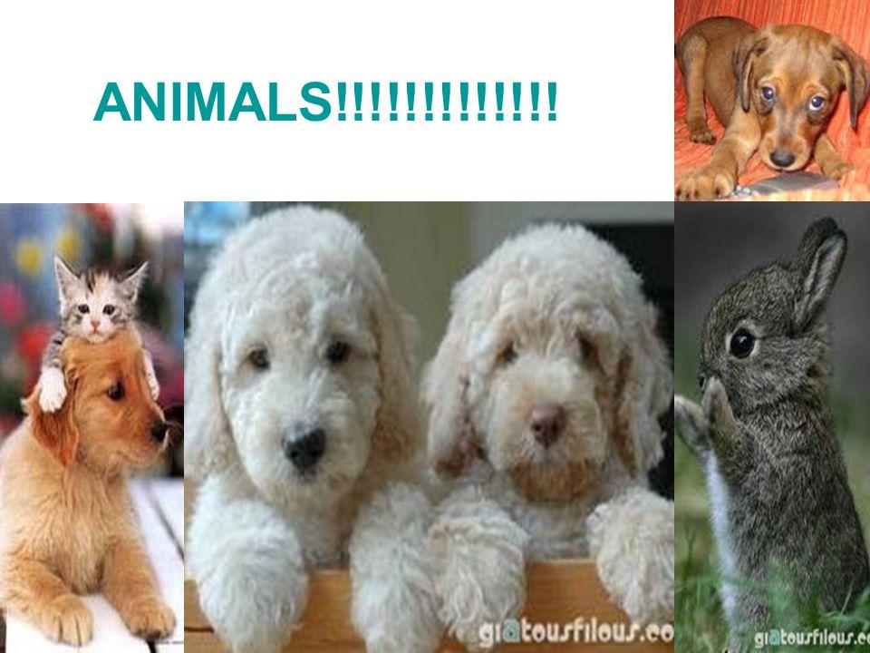 ANIMALS!!!!!!!!!!!!!