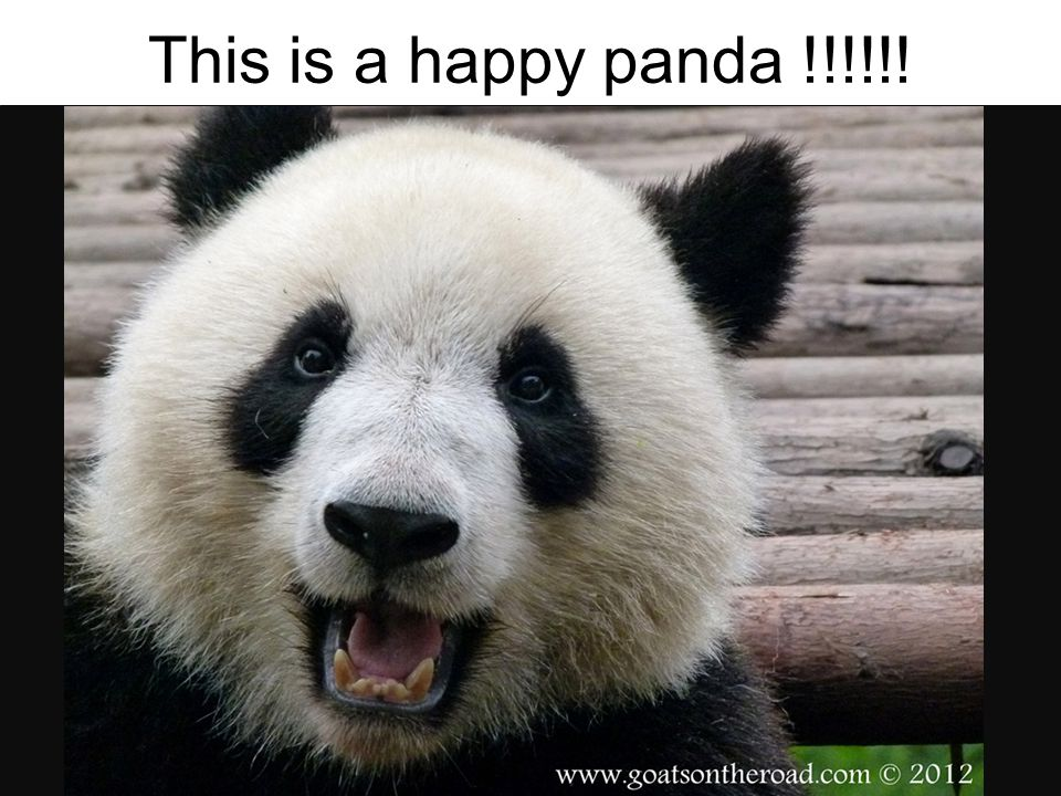 This is a happy panda !!!!!!