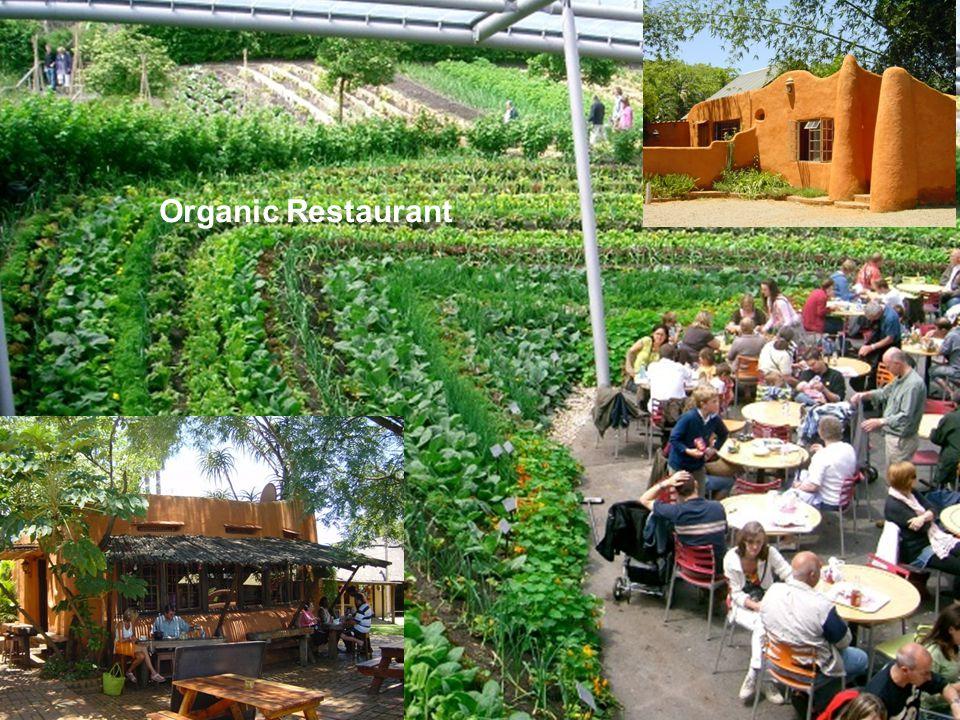 Organic Restaurant