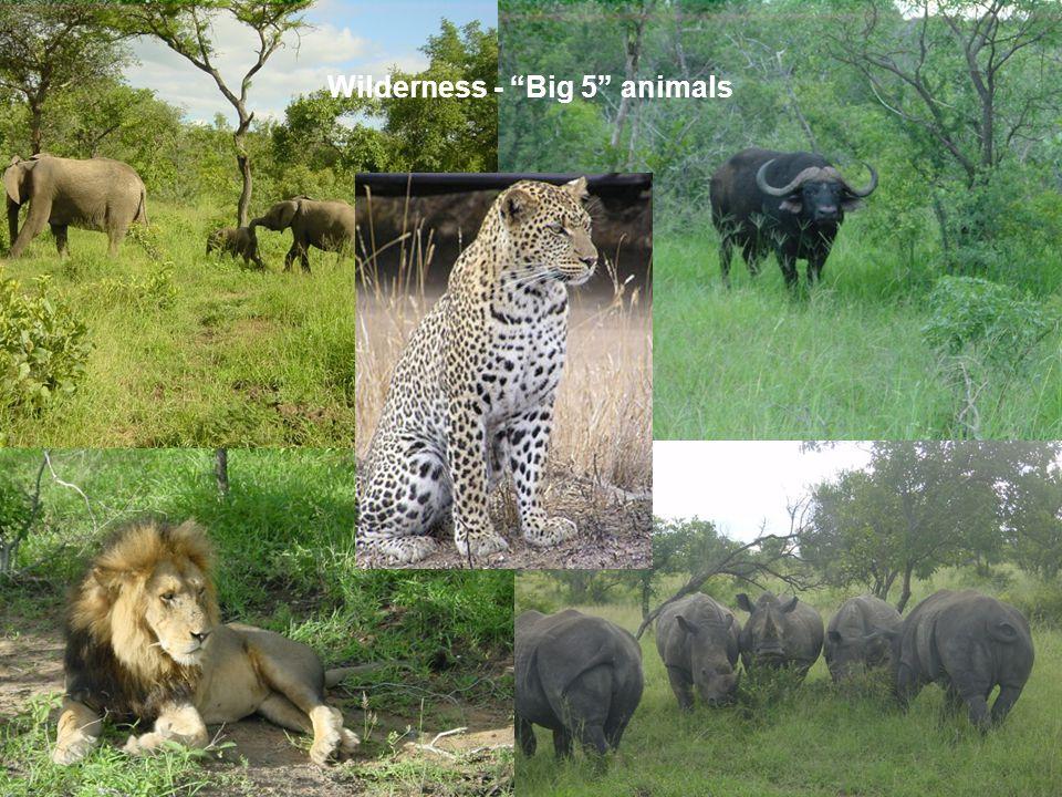 Wilderness - Big 5 animals