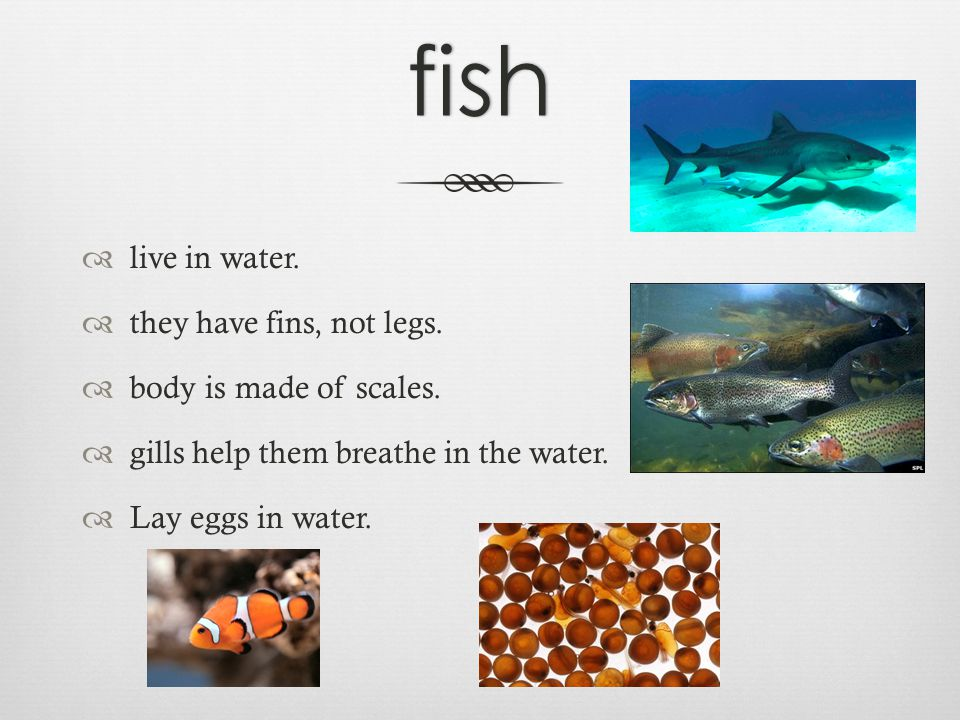 fish  live in water.  they have fins, not legs.