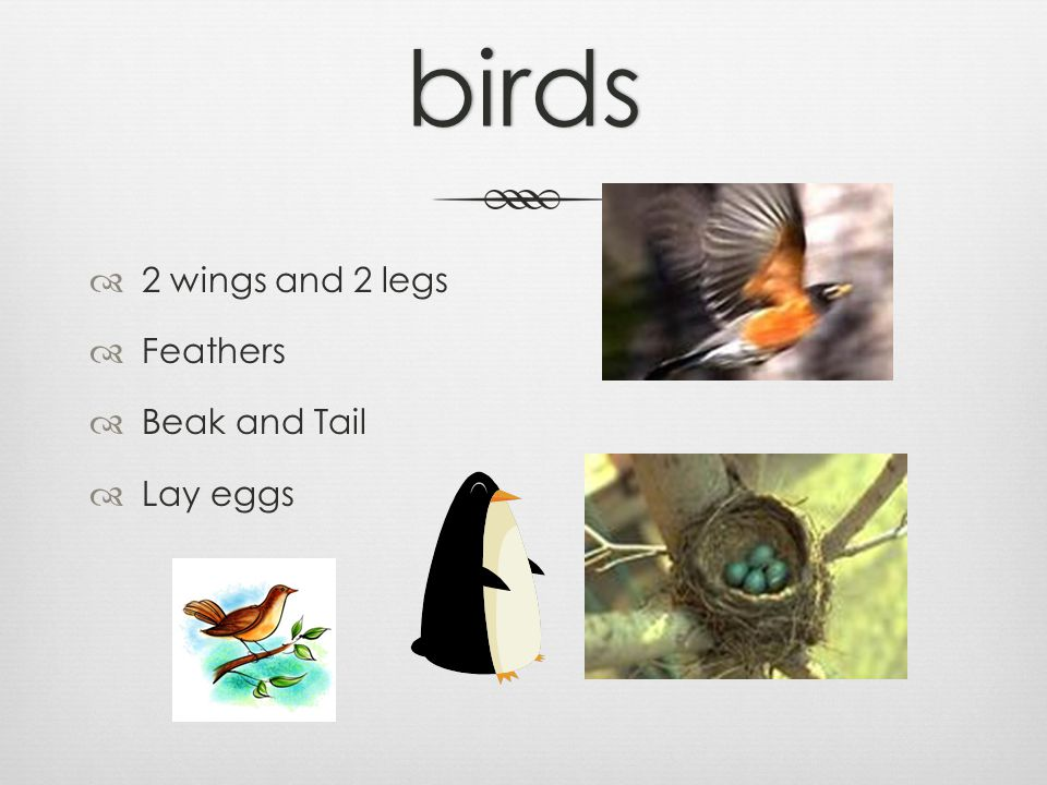 birds  2 wings and 2 legs  Feathers  Beak and Tail  Lay eggs