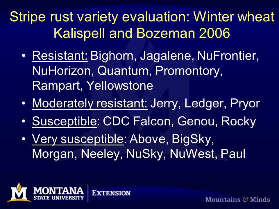 Stripe rust variety evaluation: Winter wheat Kalispell and Bozeman 2006 Resistant: Bighorn, Jagalene, NuFrontier, NuHorizon, Quantum, Promontory, Rampart, Yellowstone Moderately resistant: Jerry, Ledger, Pryor Susceptible: CDC Falcon, Genou, Rocky Very susceptible: Above, BigSky, Morgan, Neeley, NuSky, NuWest, Paul