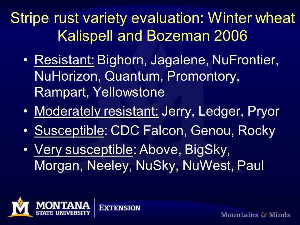 Stripe rust variety evaluation: Winter wheat Kalispell and Bozeman 2006 Resistant: Bighorn, Jagalene, NuFrontier, NuHorizon, Quantum, Promontory, Ramp