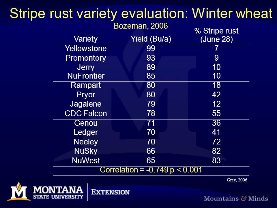 Stripe rust variety evaluation: Winter wheat Bozeman, 2006 VarietyYield (Bu/a) % Stripe rust (June 28) Yellowstone997 Promontory939 Jerry8910 NuFrontier8510 Rampart8018 Pryor8042 Jagalene7912 CDC Falcon7855 Genou7136 Ledger7041 Neeley7072 NuSky6682 NuWest6583 Correlation = -0.749 p < 0.001 Grey, 2006