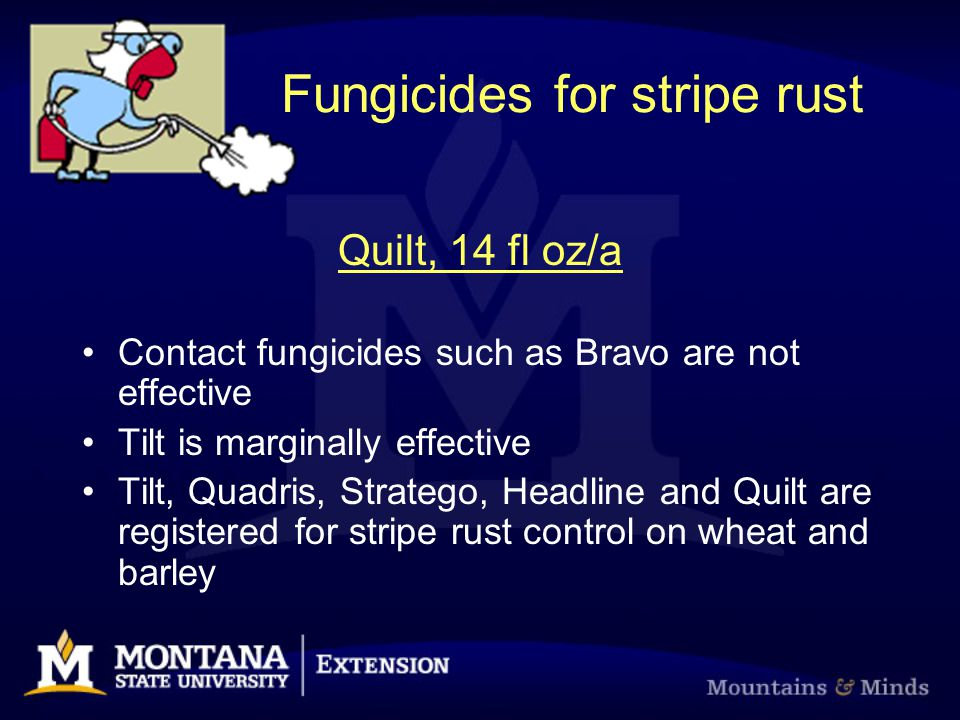 Fungicides for stripe rust Quilt, 14 fl oz/a Contact fungicides such as Bravo are not effective Tilt is marginally effective Tilt, Quadris, Stratego,