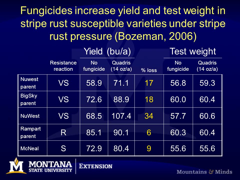 Fungicides increase yield and test weight in stripe rust susceptible varieties under stripe rust pressure (Bozeman, 2006) Yield (bu/a)Test weight Resistance reaction No fungicide Quadris (14 oz/a) % loss No fungicide Quadris (14 oz/a) Nuwest parent VS58.971.11756.859.3 BigSky parent VS72.688.91860.060.4 NuWest VS68.5107.43457.760.6 Rampart parent R85.190.1660.360.4 McNeal S72.980.4955.6