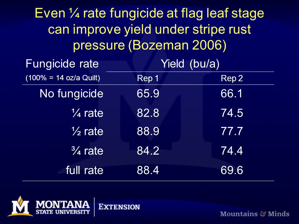 Even ¼ rate fungicide at flag leaf stage can improve yield under stripe rust pressure (Bozeman 2006) Fungicide rateYield (bu/a) (100% = 14 oz/a Quilt)