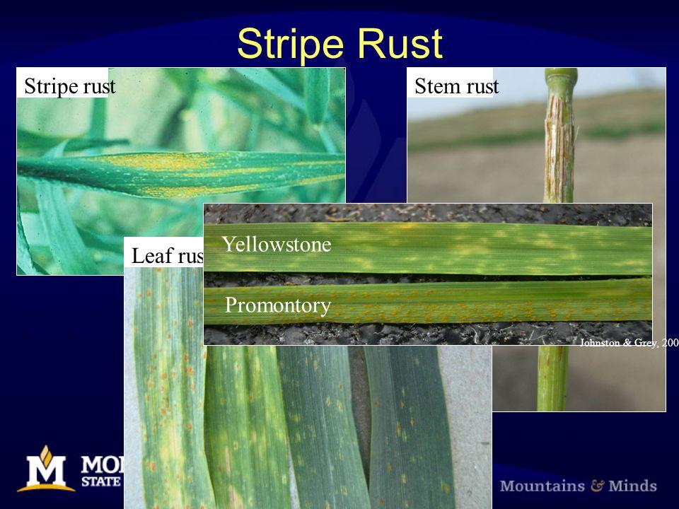 Stripe Rust Stripe rust Leaf rust Stem rust Yellowstone Promontory Johnston & Grey, 2006