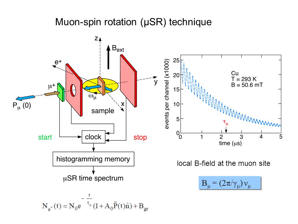 Muon-spin rotation (μSR) technique B μ = (2π/γ μ ) ν μ local B-field at the muon site