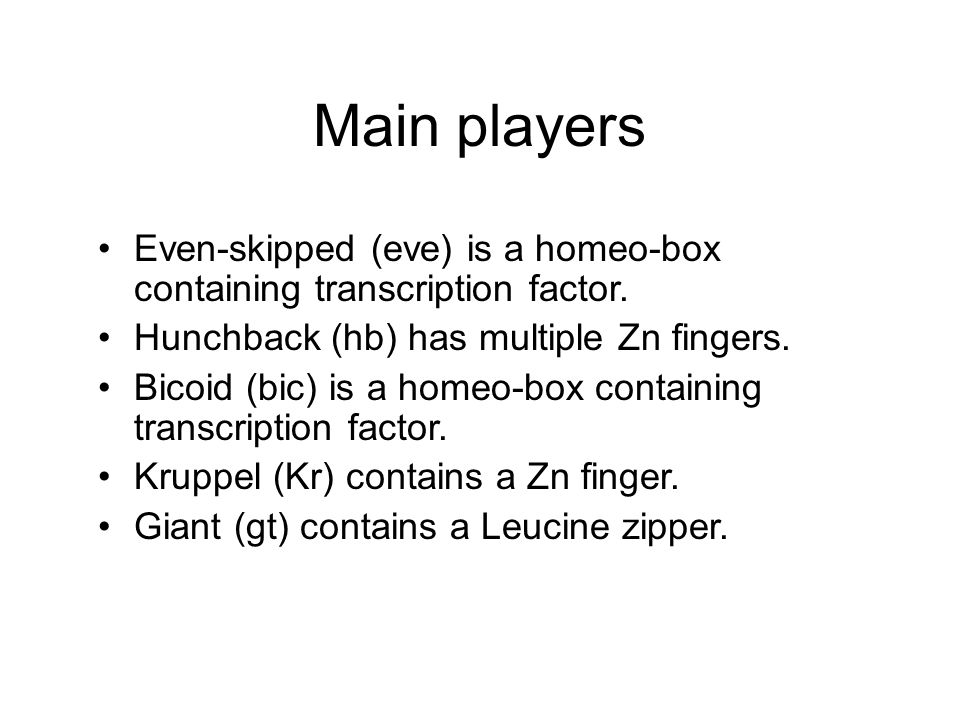 Main players Even-skipped (eve) is a homeo-box containing transcription factor.