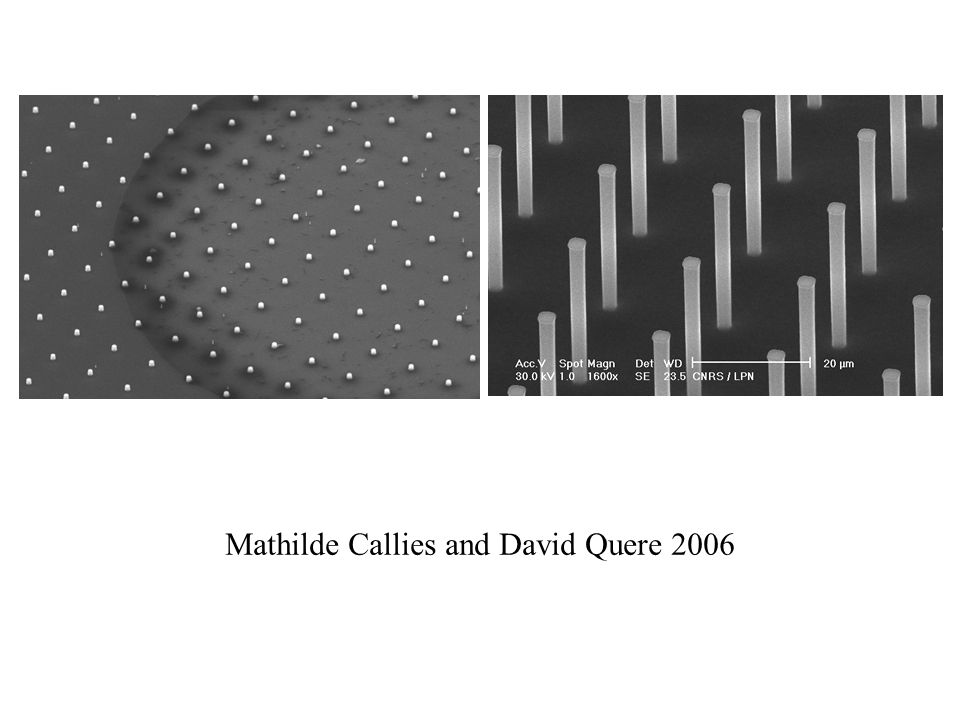 Mathilde Callies and David Quere 2006