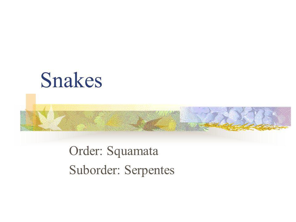 Snakes Order: Squamata Suborder: Serpentes