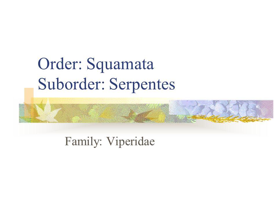 Order: Squamata Suborder: Serpentes Family: Viperidae