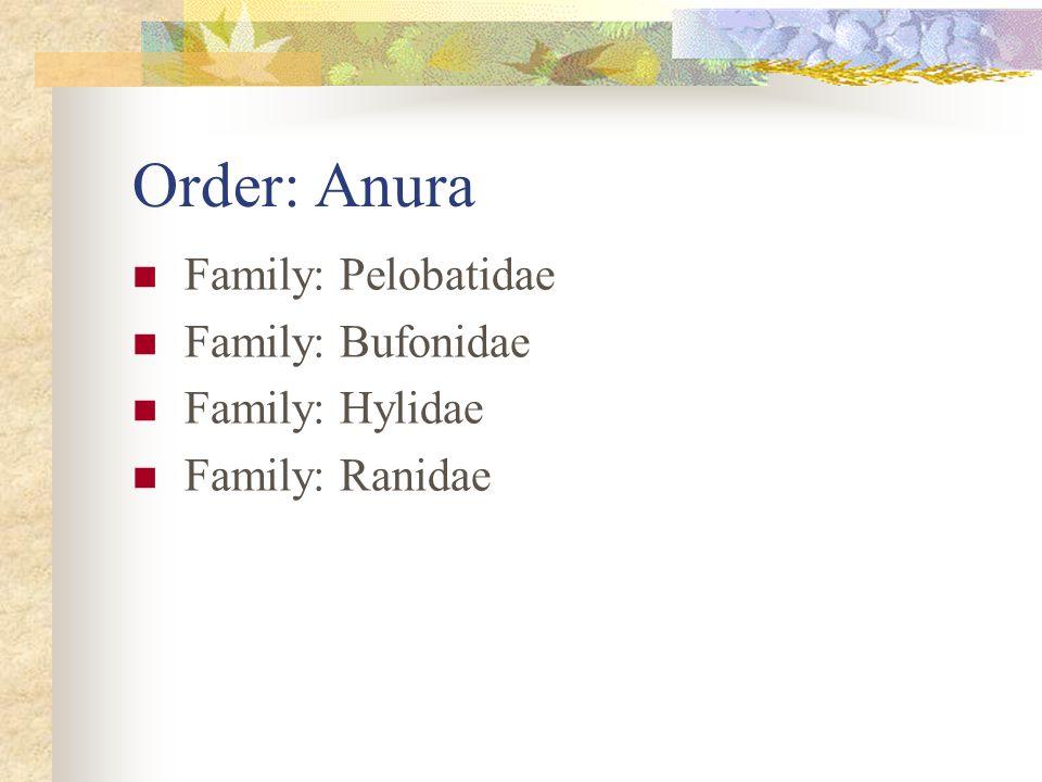 Order: Anura Family: Pelobatidae Family: Bufonidae Family: Hylidae Family: Ranidae