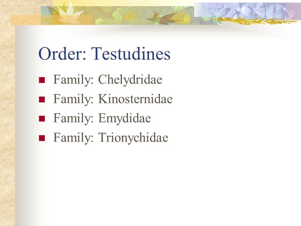Order: Testudines Family: Chelydridae Family: Kinosternidae Family: Emydidae Family: Trionychidae
