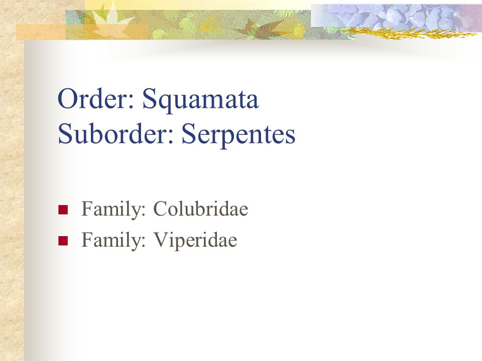 Order: Squamata Suborder: Serpentes Family: Colubridae Family: Viperidae