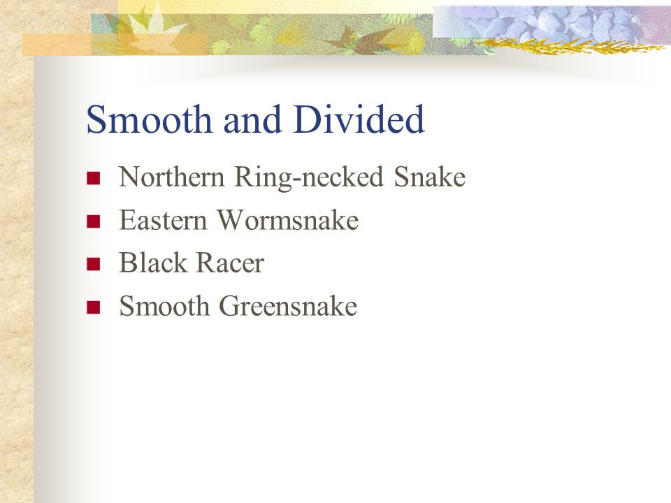 Smooth and Divided Northern Ring-necked Snake Eastern Wormsnake Black Racer Smooth Greensnake