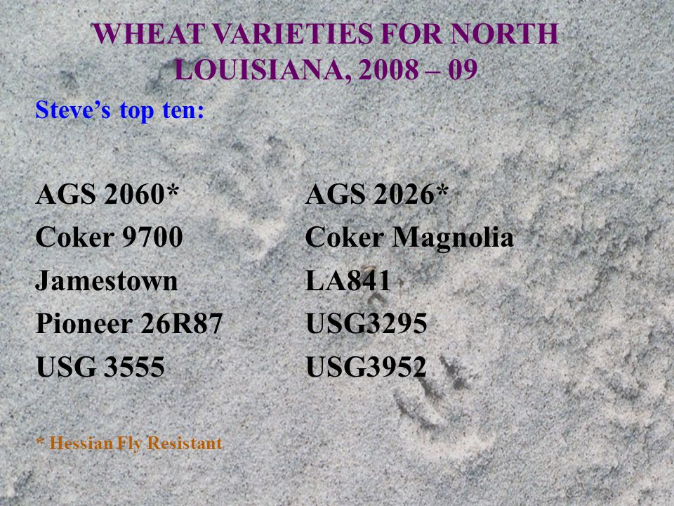 WHEAT VARIETIES FOR NORTH LOUISIANA, 2008 – 09 Steve's top ten: AGS 2060*AGS 2026* Coker 9700Coker Magnolia JamestownLA841 Pioneer 26R87USG3295 USG 3555USG3952 * Hessian Fly Resistant