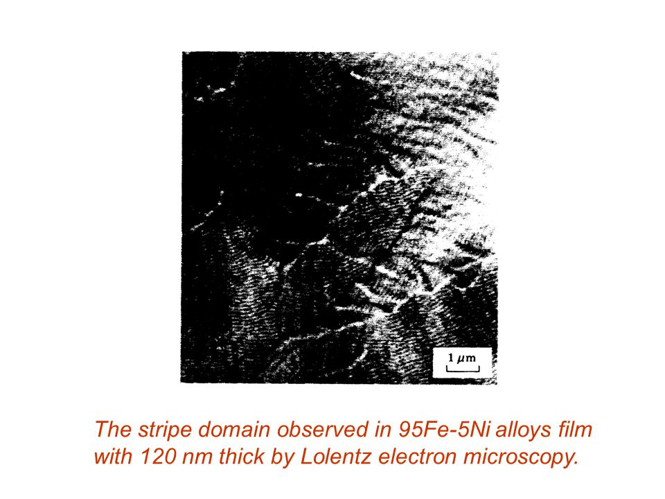 The stripe domain observed in 95Fe-5Ni alloys film with 120 nm thick by Lolentz electron microscopy.