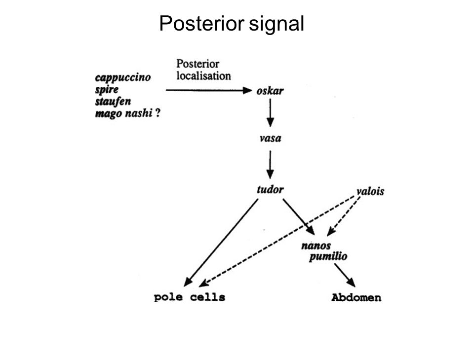 Posterior signal