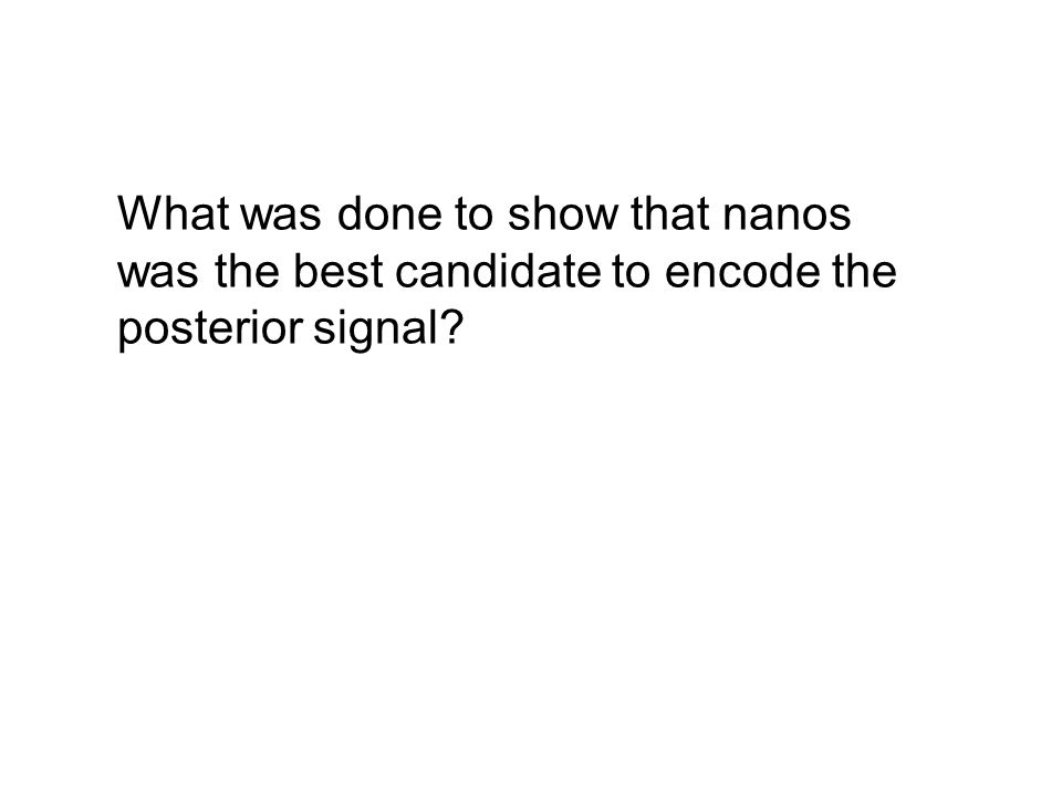 What was done to show that nanos was the best candidate to encode the posterior signal