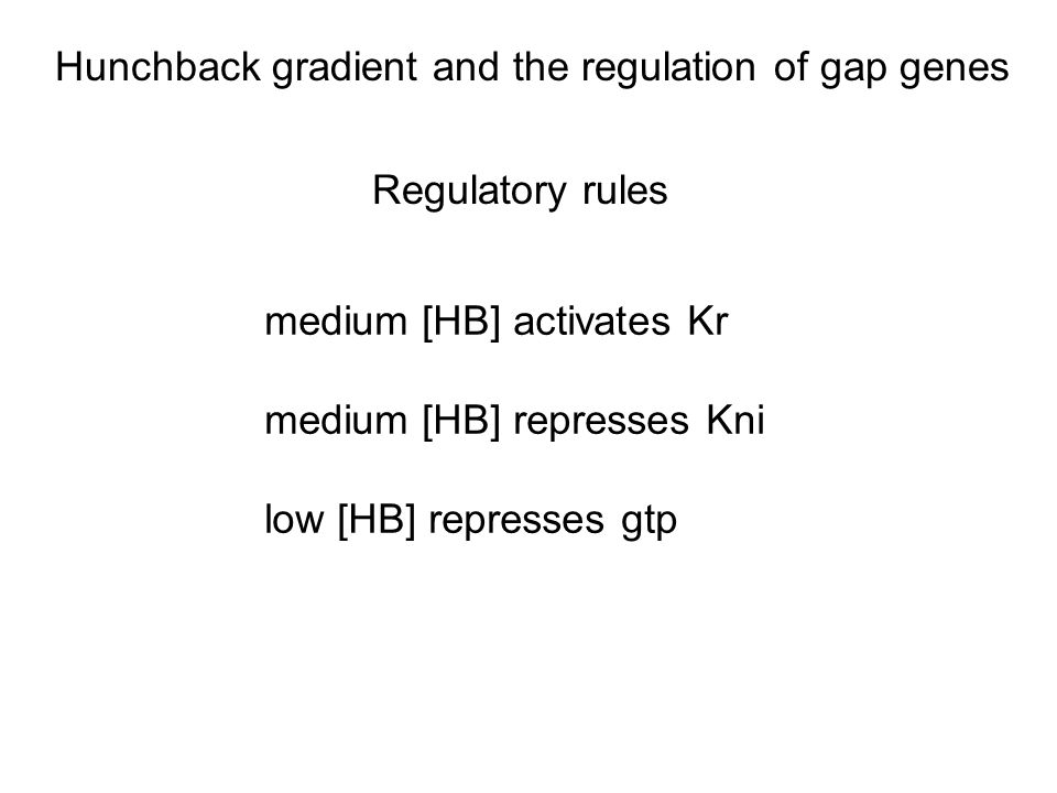 Regulatory rules medium [HB] activates Kr medium [HB] represses Kni low [HB] represses gtp