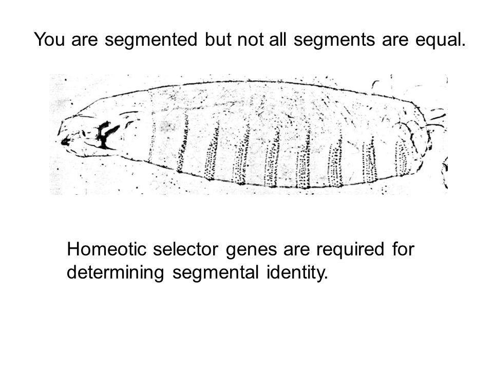 You are segmented but not all segments are equal.