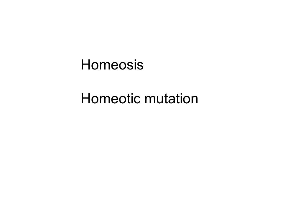 Homeosis Homeotic mutation