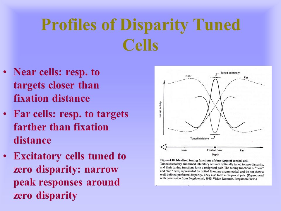 Profiles of Disparity Tuned Cells Near cells: resp. to targets closer than fixation distance Far cells: resp. to targets farther than fixation distanc