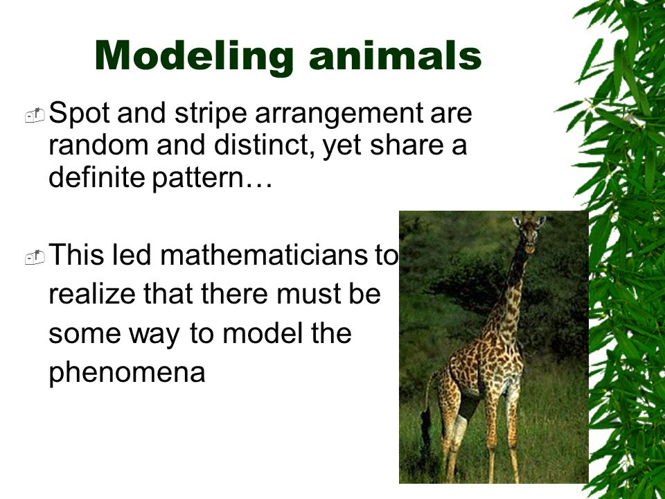 Modeling animals  Spot and stripe arrangement are random and distinct, yet share a definite pattern…  This led mathematicians to realize that there must be some way to model the phenomena
