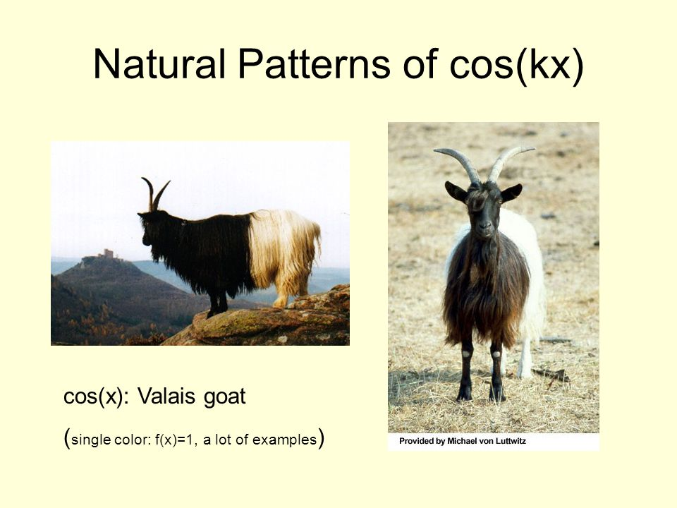Natural Patterns of cos(kx) cos(x): Valais goat ( single color: f(x)=1, a lot of examples )