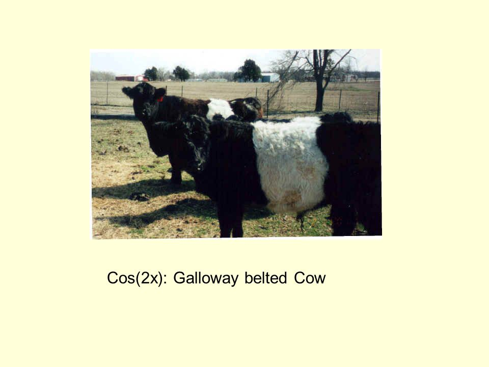 Cos(2x): Galloway belted Cow