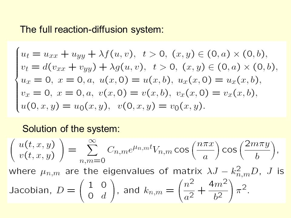 The full reaction-diffusion system: Solution of the system: