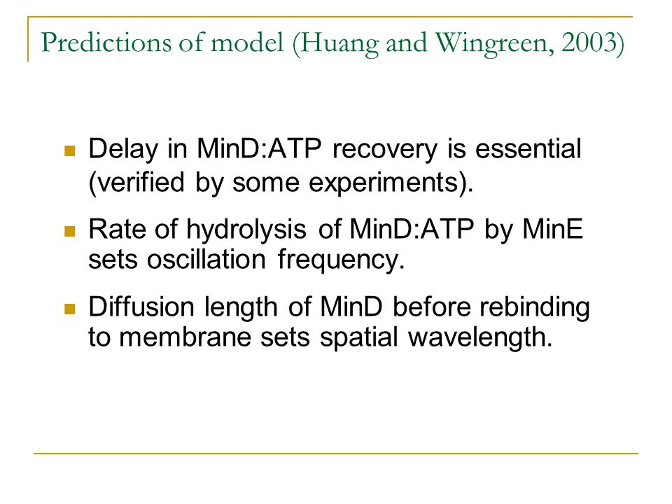 Predictions of model (Huang and Wingreen, 2003) Delay in MinD:ATP recovery is essential (verified by some experiments).