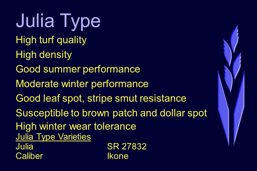 Julia Type High turf quality High density Good summer performance Moderate winter performance Good leaf spot, stripe smut resistance Susceptible to brown patch and dollar spot High winter wear tolerance Julia Type Varieties JuliaSR 27832 CaliberIkone