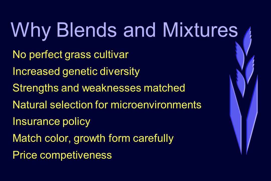 Why Blends and Mixtures No perfect grass cultivar Increased genetic diversity Strengths and weaknesses matched Natural selection for microenvironments