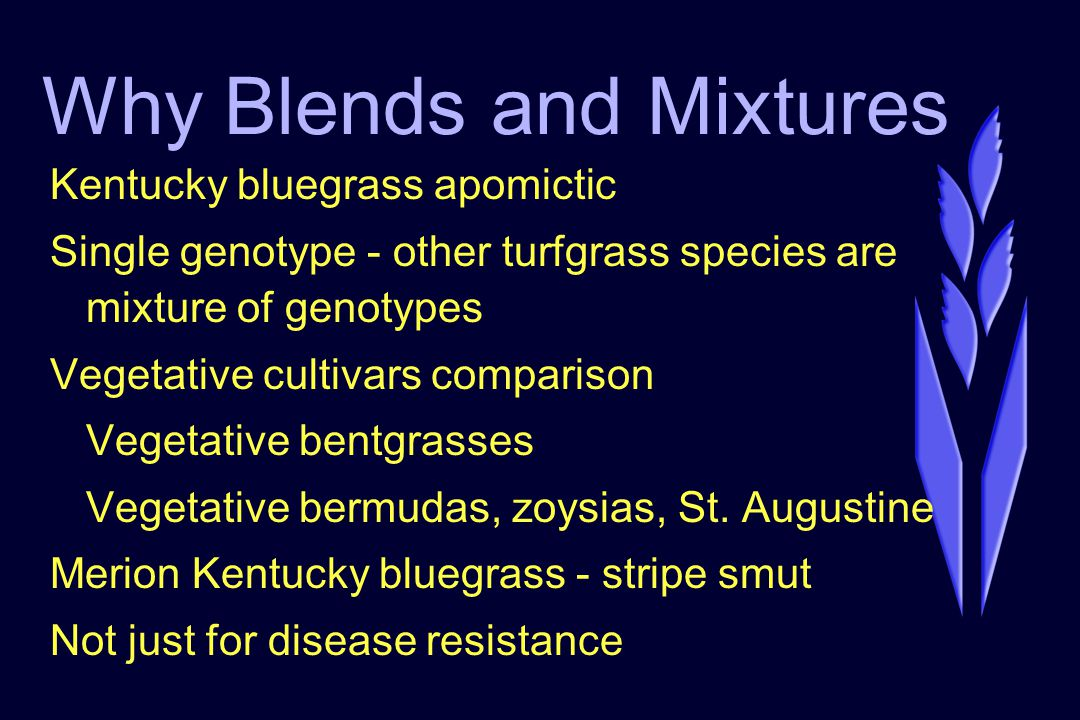 Why Blends and Mixtures Kentucky bluegrass apomictic Single genotype - other turfgrass species are mixture of genotypes Vegetative cultivars comparison Vegetative bentgrasses Vegetative bermudas, zoysias, St.