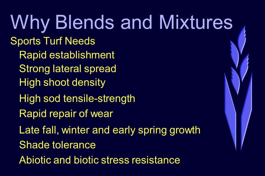 Why Blends and Mixtures Sports Turf Needs Rapid establishment Strong lateral spread High shoot density High sod tensile-strength Rapid repair of wear Late fall, winter and early spring growth Shade tolerance Abiotic and biotic stress resistance