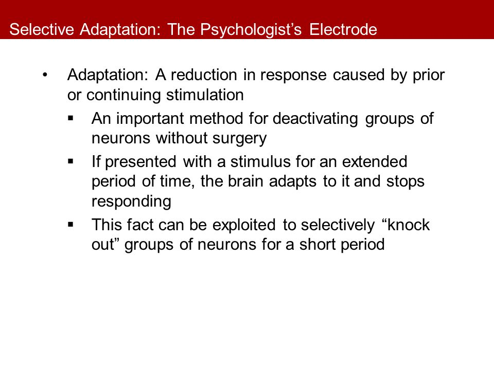 Selective Adaptation: The Psychologist's Electrode Adaptation: A reduction in response caused by prior or continuing stimulation  An important method for deactivating groups of neurons without surgery  If presented with a stimulus for an extended period of time, the brain adapts to it and stops responding  This fact can be exploited to selectively knock out groups of neurons for a short period