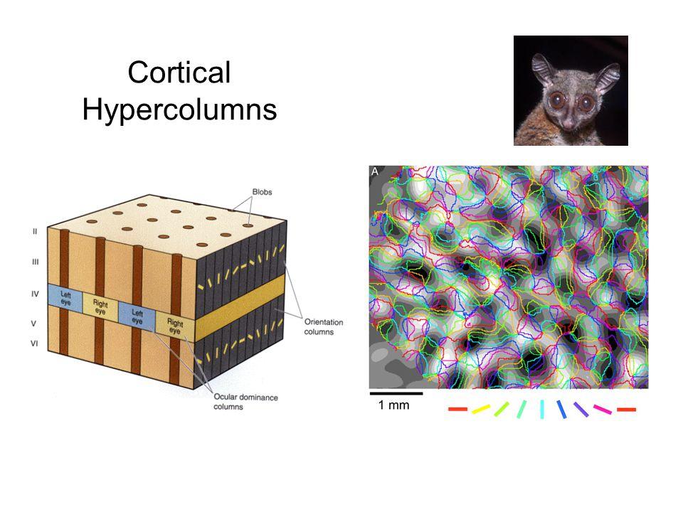 Cortical Hypercolumns