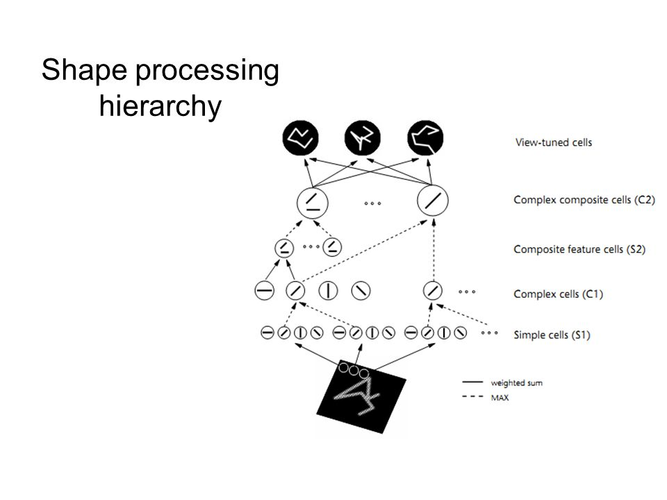 Shape processing hierarchy
