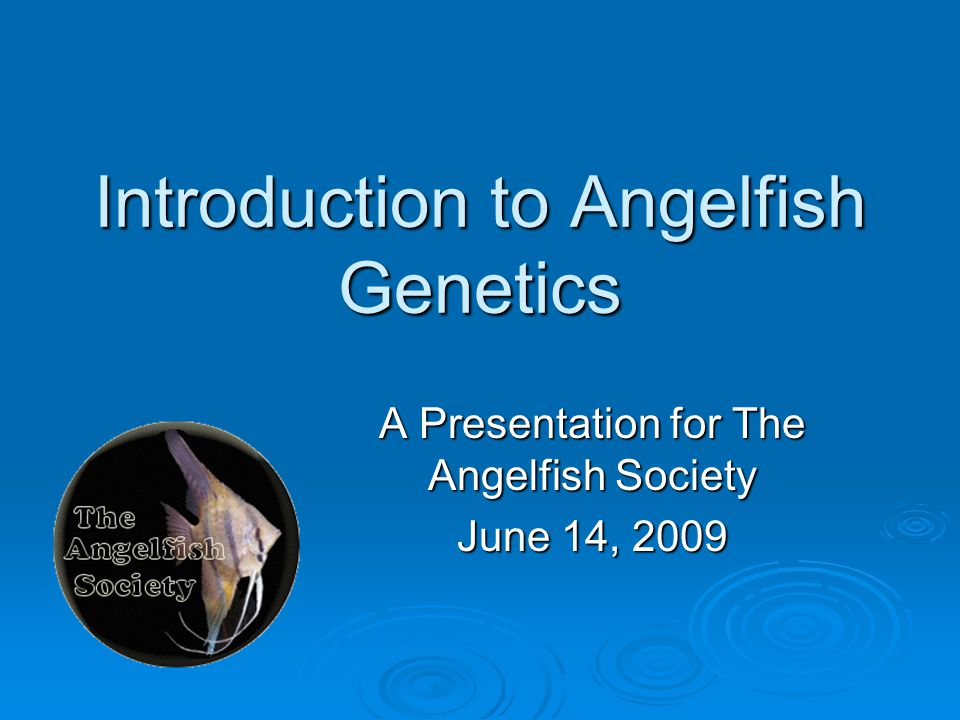 Introduction to Angelfish Genetics A Presentation for The Angelfish Society June 14, 2009